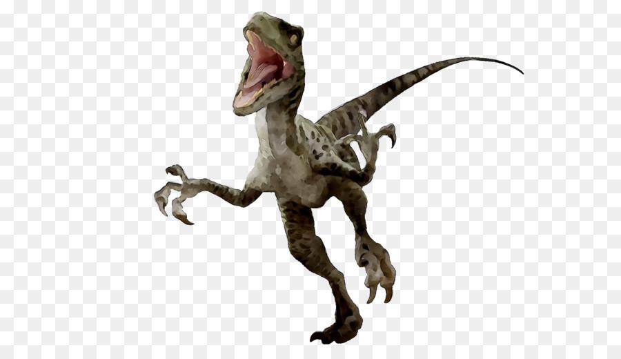 Velociraptor, Tyrannosaurus, Dinosaurio imagen png.