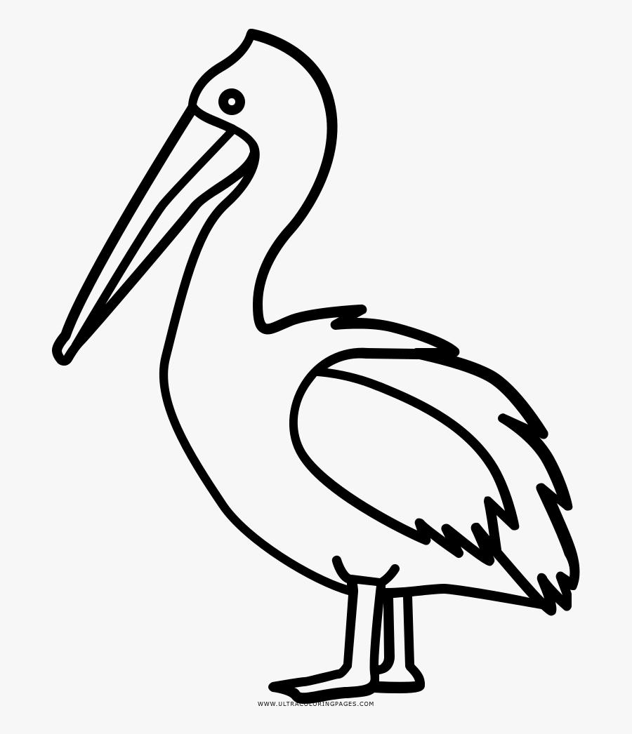 Pelican Coloring Page.