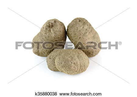 Pictures of Air potato, dioscorea isolated on white background.
