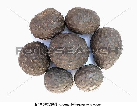 Stock Photography of Aerial tubers, greater yam called as 'Kokan.