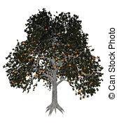 Diospyros Illustrations and Clipart. 15 Diospyros royalty free.