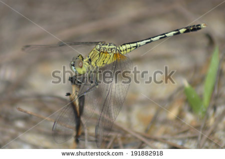 Trivialis Stock Photos, Images, & Pictures.