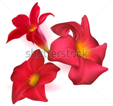 Three Vector Realistic Red Dipladenia Flowers stock vector.