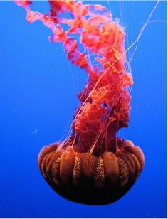 1000+ images about Under sea on Pinterest.
