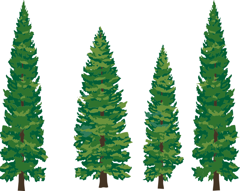 Pine Trees Clipart.