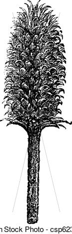 Vector of Flower and head of a teasel Fuller or flower and head of.