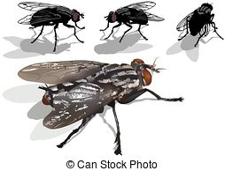 Dipterous Illustrations and Clip Art. 25 Dipterous royalty free.