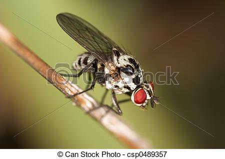 Picture of Fly.