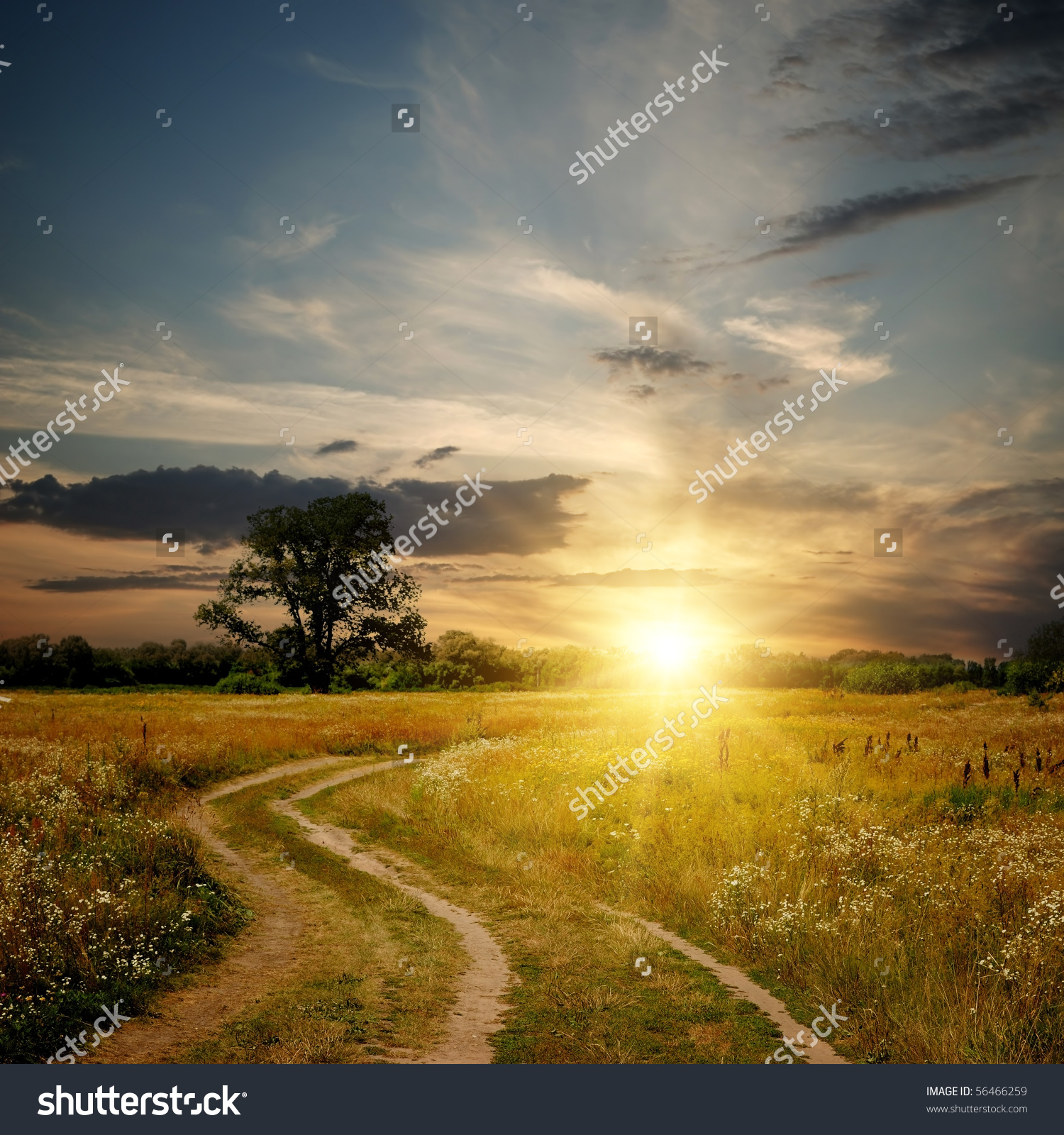 Field Dirt Road Sunset Evening Landscape Stock Photo 56466259.