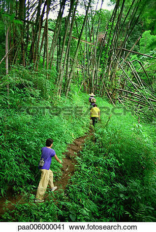 Stock Photography of People hiking through woods on dirt trail.