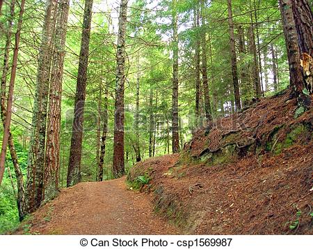 Picture of Pine Forest Hiking Trail.