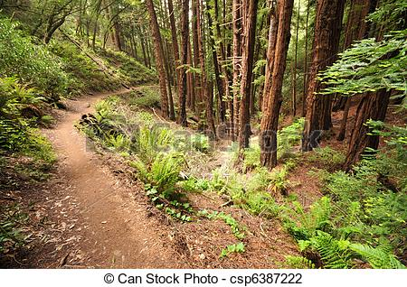 Stock Images of Dirt trail through the woods with bushes.