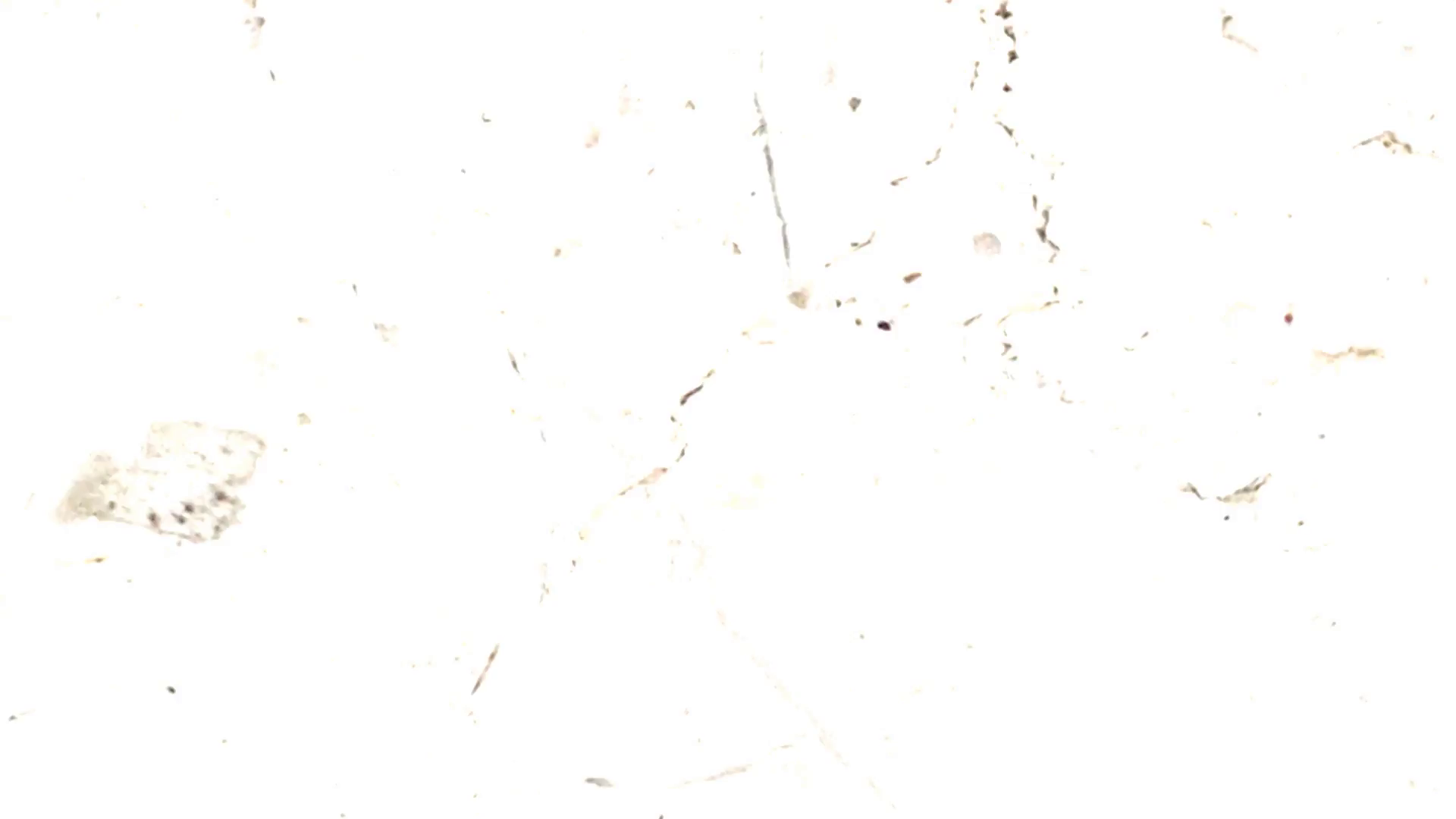 Scratches HD PNG Transparent Scratches HD.PNG Images..