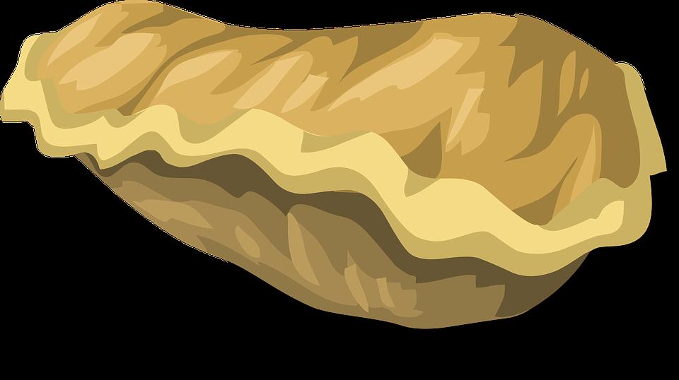 Free vector graphic: Fungus, Fungal, Mushroom, Brown.