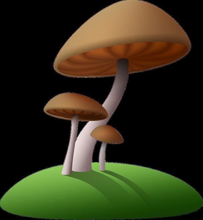 Free photo Fungus White Natural Mushroom Nature Forest.