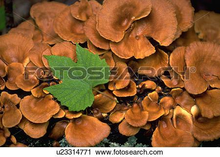 Stock Photography of texture, forest, mushrooms, arkansas, fungus.