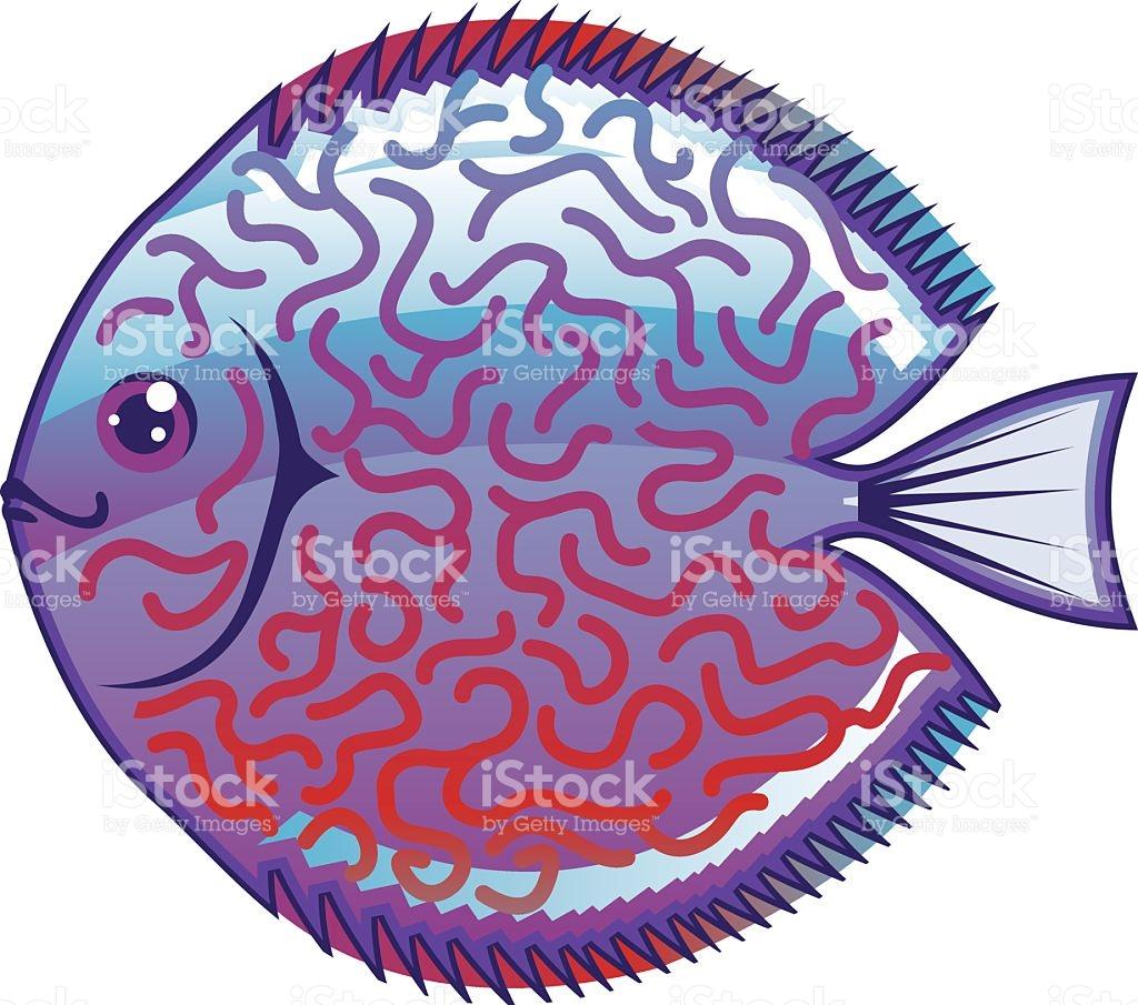 Discus Aquarium Fish Vector stock vector art 475394636.