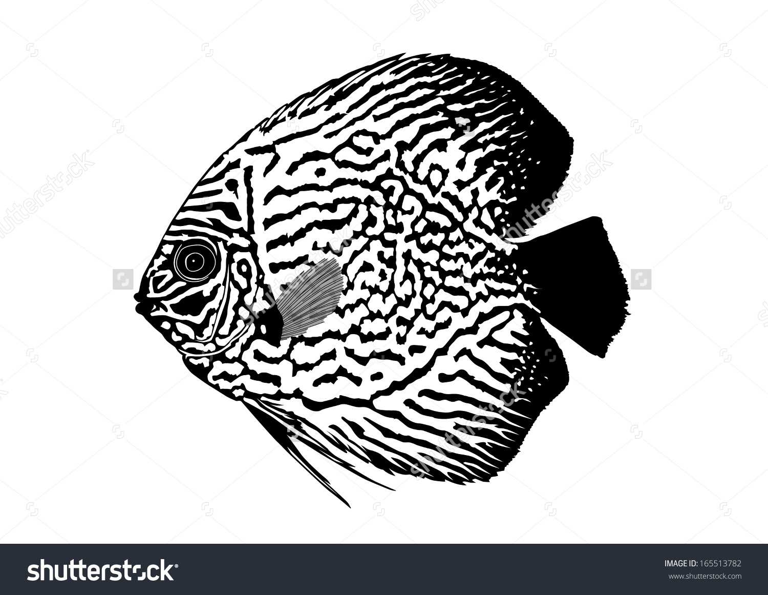 Discus Fish Silhouette Stock Vector 165513782.