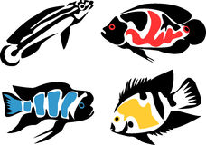 Cichlid Stock Illustrations.