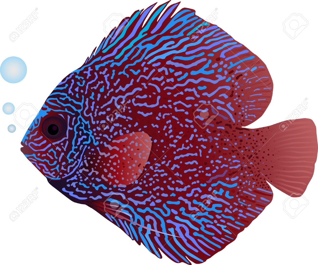 A Detailed Illustration Of A Snakeskin Discus Fish Royalty Free.