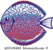 Discus fish Clip Art and Illustration. 51 discus fish clipart.