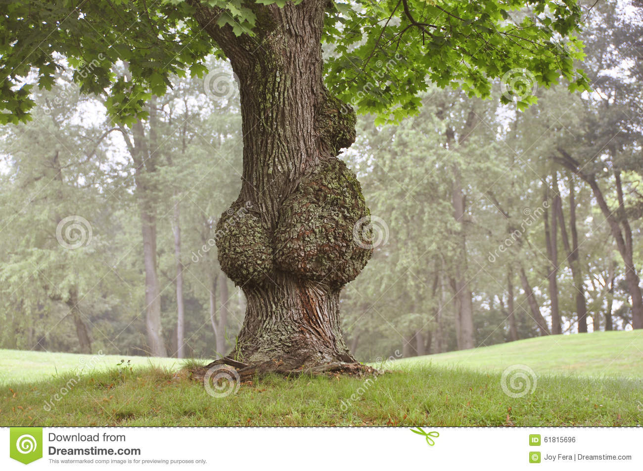 Diseased Tree Clipart.