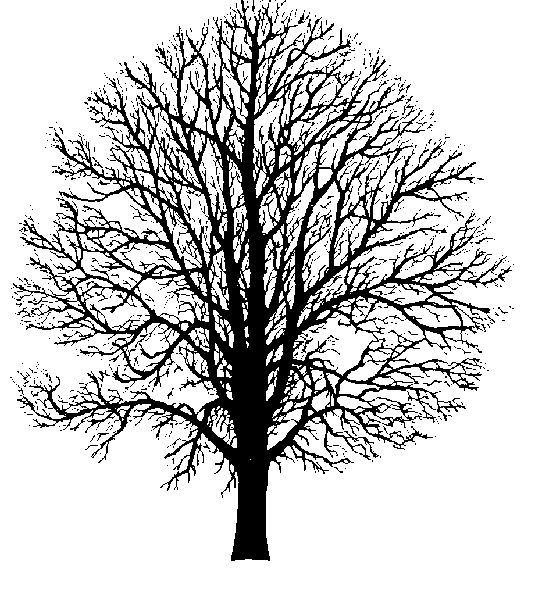 17 Best images about clipart trees on Pinterest.