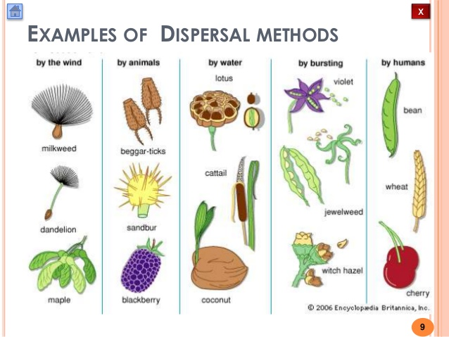 Biology M4 Fruit and Seed Dispersal.