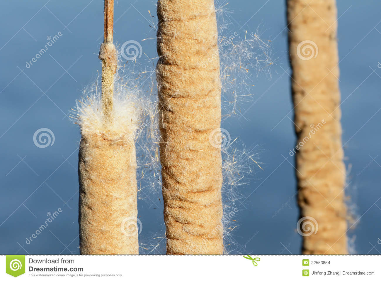 Seed Dispersal Stock Images.