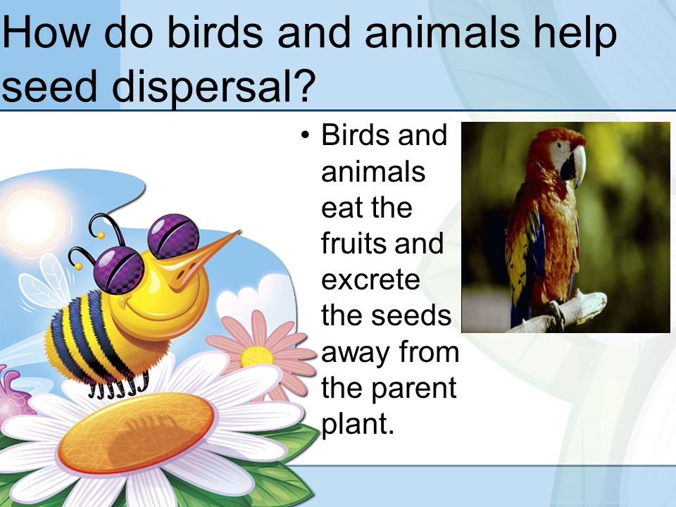 Seed dispersal by wind clipart.