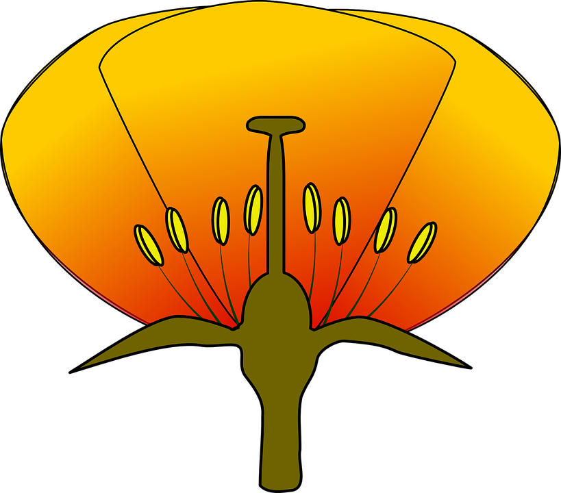 Free vector graphic: Flower, Dissection, Dissected.