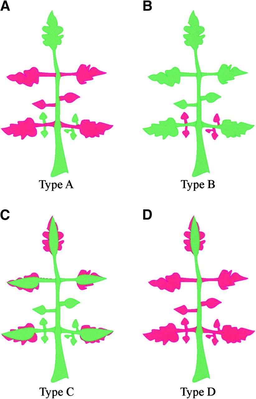 Quantitative Trait Locus Analysis of Leaf Dissection in Tomato.