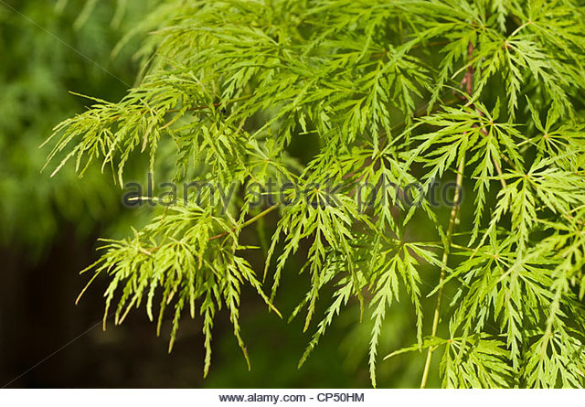 Dissected Plant Stock Photos & Dissected Plant Stock Images.