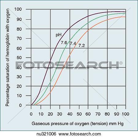 Stock Illustration of Oxyhemoglobin dissociation curve. nu321006.