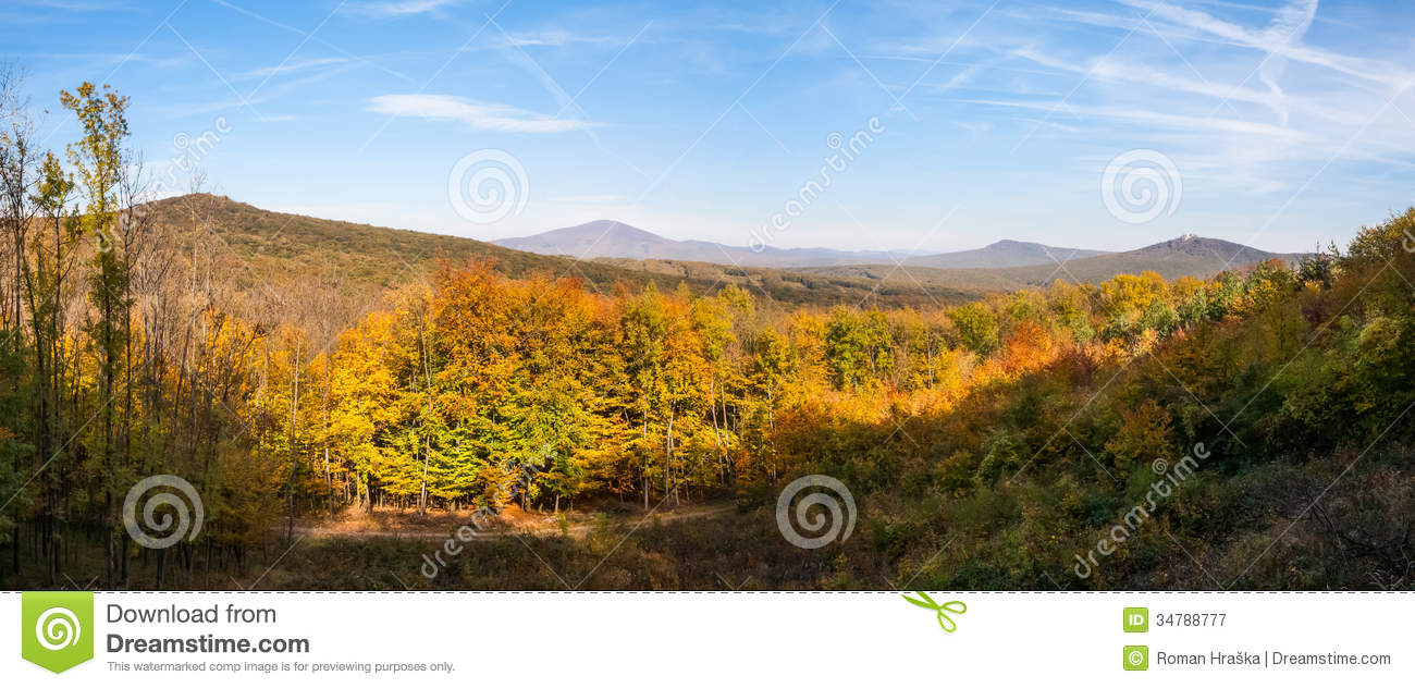 Panoramic View Of Colorfull Forest Royalty Free Stock Photography.