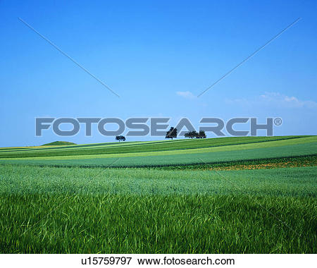 Picture of Distant view of trees on a vast grassland u15759797.