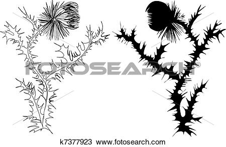 Clipart of drawing thistle black and white and k7377923.