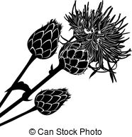 Distel Stock Illustrationen Bilder. 376 Distel Illustrationen von.