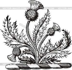 Distel clipart - Clipground
