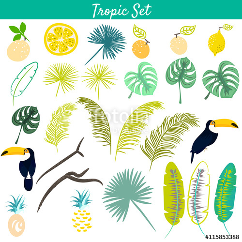Tropic clipart vector set. Toucan birds, pineapples, jungle and.