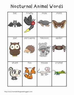 A Place Called Kindergarten: nocturnal animals or day and night.