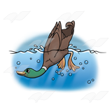 A Beka Book :: Clip Art :: Diving Duck.