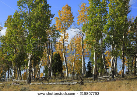 Dixie National Forest Stock Photos, Royalty.