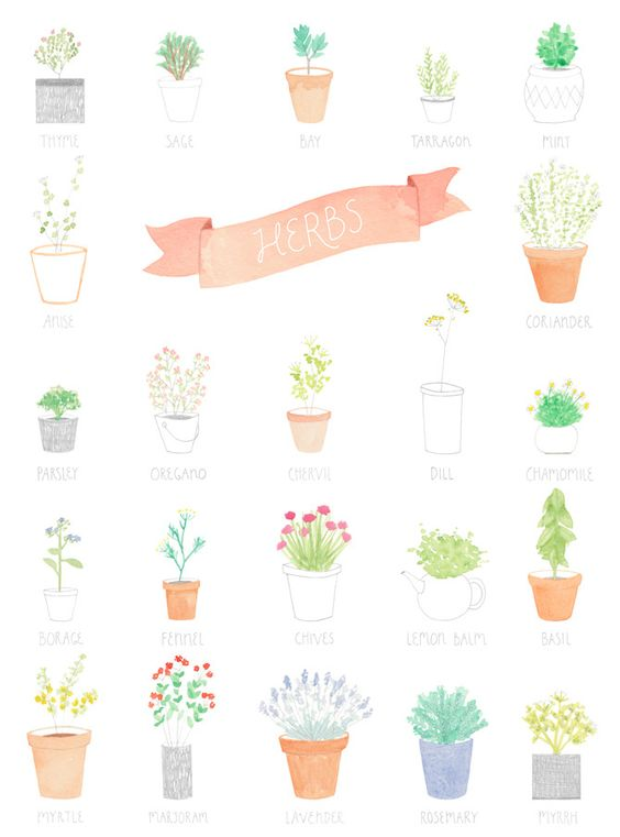 delicate herb print by amy borrell of cakewithgiants.com via.