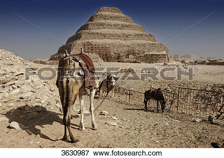 Picture of Camel in front of the step pyramid of Djoser, Saqqara.