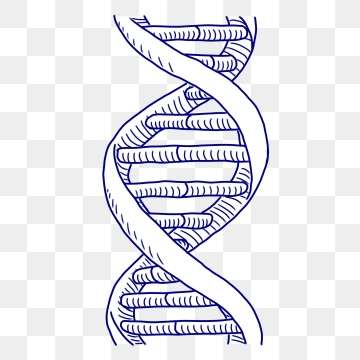 Dna Clipart Images, 59 PNG Format Clip Art For Free Download.