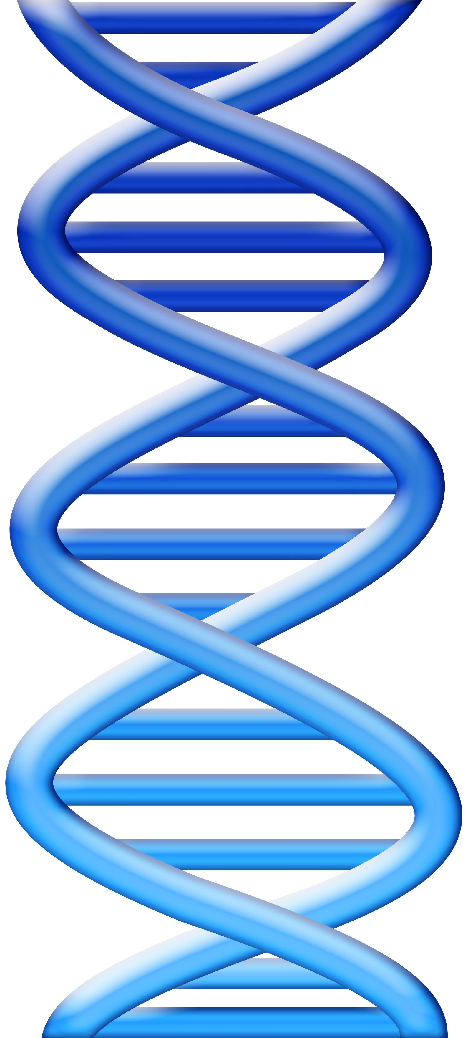 Dna clipart free download.