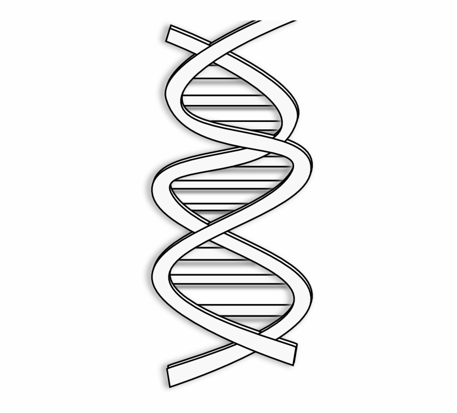 Dna Black And White Clipart, Transparent Png Download For Free.
