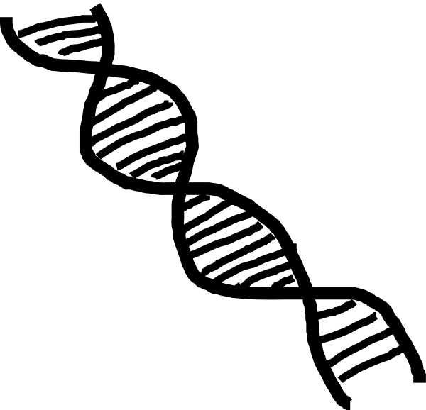 Free DNA Cliparts, Download Free Clip Art, Free Clip Art on Clipart.