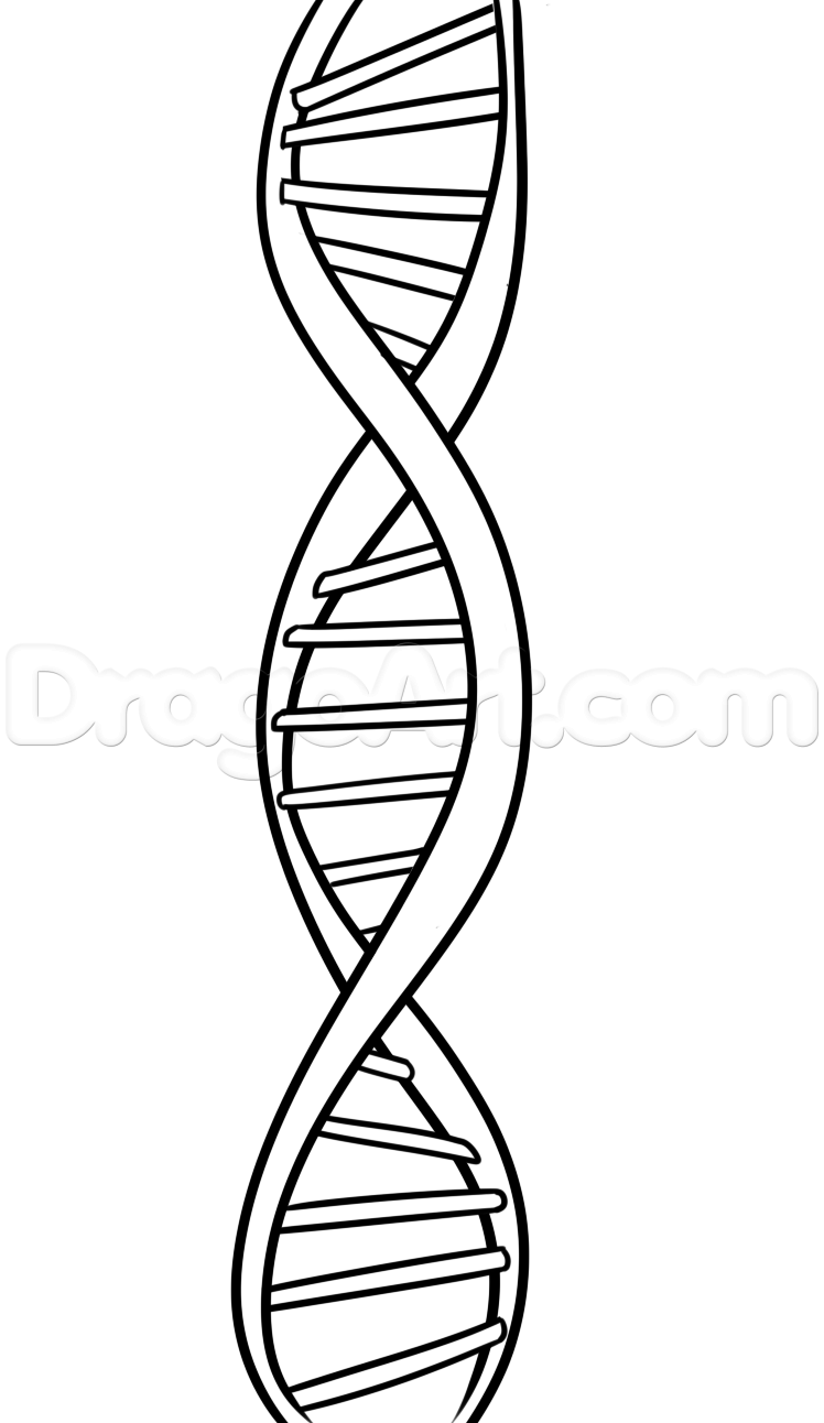 How to Draw DNA, Step by Step, Anatomy, People, FREE Online.